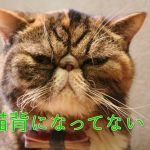 猫背になってない?アラフィフを老けさせる猫背の原因と改善方法